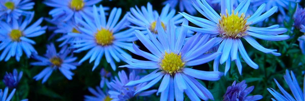 esas_flores