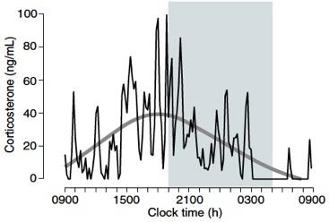 Figura 1. La corticosterona es la hormona análoga del cortisol en ratas y varía en pulsos cercanos a la hora durante el día (línea negra) a la vez que muestra una tendencia circadiana (línea gris). A diferencia de los humanos, las ratas son activas durante la noche y alcanzan máximos niveles de corticosterona durante la tarde, justo antes de despertar. El área sombreada corresponde a la fase nocturna del día. Figura tomada de Spiga et al. 2014 Compr Physiol [2].