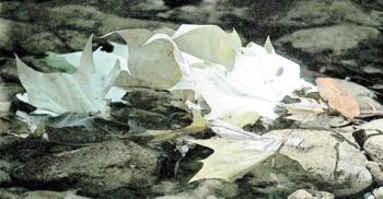 Fotografía, hojas muertas (2002)