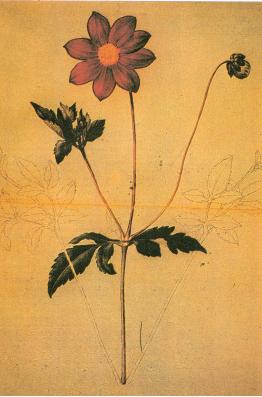 Ejemplares de flora mexicana de Sesé y Mociño