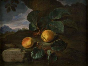 Bartolomeo Bimbi, Pesche di Germania, 1703. Olio su tela. Sezione di Botanica del Museo di Scienze Naturali (MSN) dell'Università di Firenze. Fonte MSN