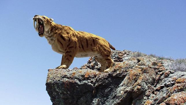 tigre-dientes-sable--644x362