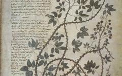 Fotografía 3.- Una de las ilustraciones del Dioscórides de Viena. Fuente: Wikimedia Commons (http://upload.wikimedia.org/wikipedia/commons/3/30/ViennaDioscoridesPlant.jpg?uselang=es).