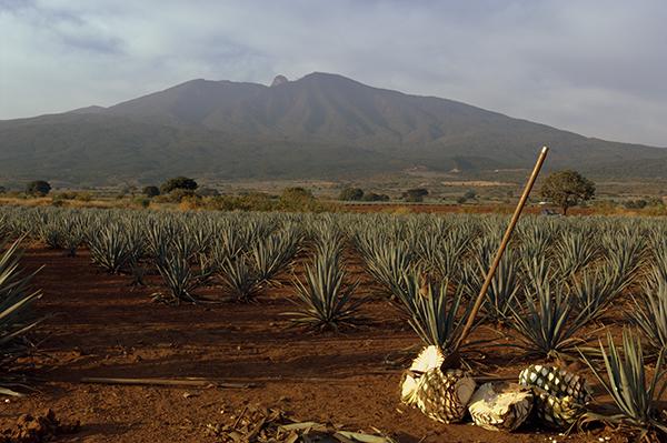 http://visita.jalisco.gob.mx/explora/municipios/tequila-pueblo-magico