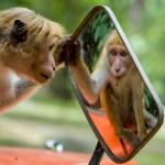 monkeyATmirror