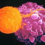 biologia-celular-accura-monterrey