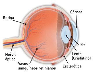 Cada punto de la realidad le corresponde un punto en nuestro mapa (mapeo) de la realidad sobre la retina.