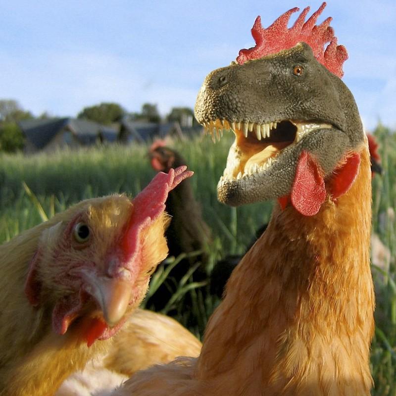 El dinosaurio que se volvió gallina