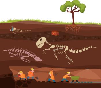 Los combutibles fósiles tienen su origen en los organismos fotoautótrofos que capturaron y almacenaron la energía solar en etapas geológicas precedentes a la actual.
