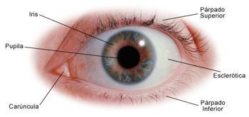 Esclera-Ocular