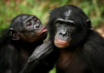 Lee también: Los bonobos, de Hiram Torres