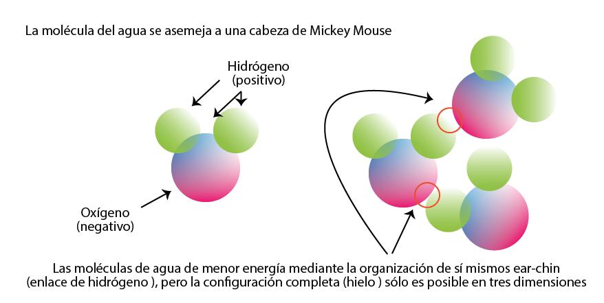 Figura 2. Una representación esquemática de una molécula de agua