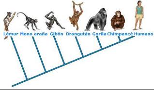 Fuente: Ciencia-origenes