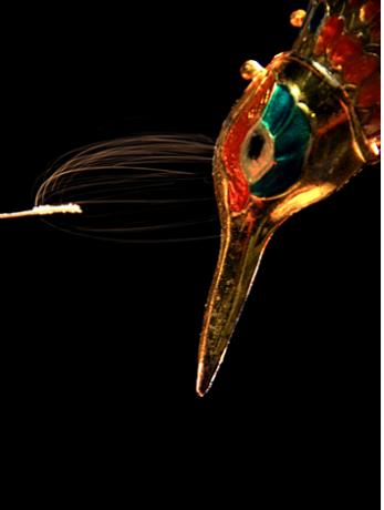 Figura 2. Fotografía de larga exposición que muestra la atracción electrostática de partículas no cargadas sobre la cabeza del modelo de colibrí cargado positivamente. Créditos Víctor Ortega.