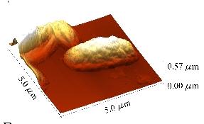 Fig. 2b