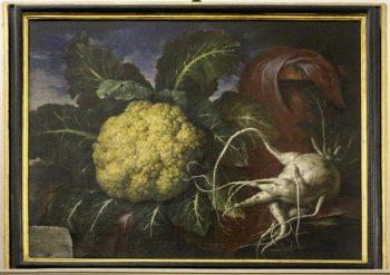 Bartolomeo Bimbi, Cavolfiore e ramolaccio, 1706. Olio su tela. Sezione di Botanica del Museo di Scienze Naturali (MSN) dell'Università di Firenze. Fonte MSN