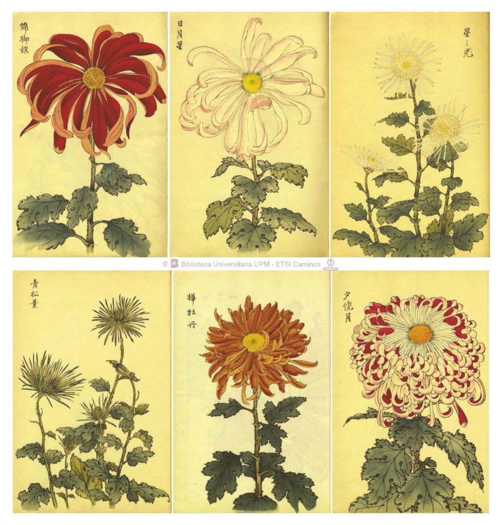 Imagen 2.- Algunas de las ilustraciones del Keika Hyakugiku que ocupan una sola página. Fuente: Colección Digital Politécnica (http://cdp.upm.es/R/?object_id=456895&func=dbin-jump-full).