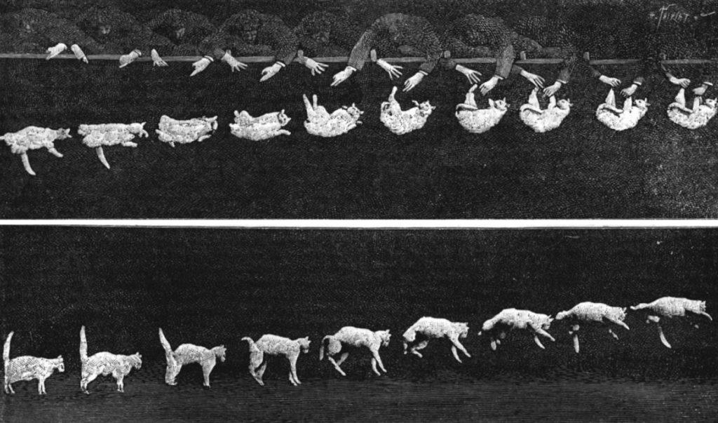 Fotografía de Étienne-Jules Marey, publicada en un tomo de Comptes Rendus en 1894.