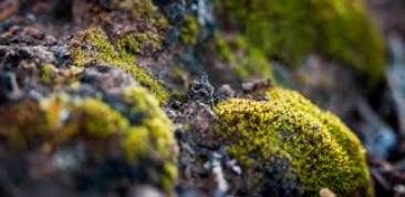 Tomada de: www.astrobio.net/extreme-life/barren-deserts-can-host-complex-ecosystems-soils/